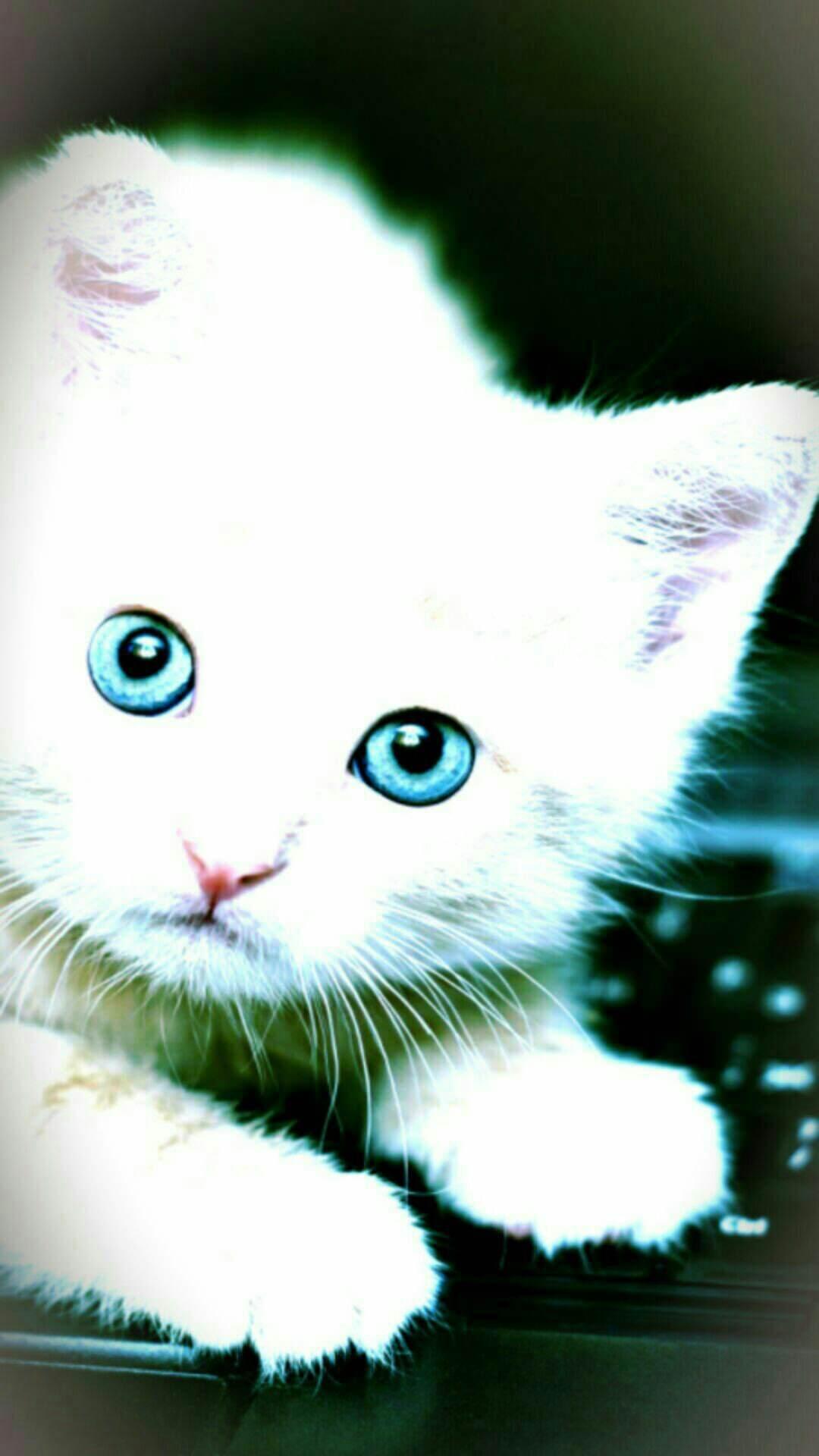 Gambar Wallpaper Wallpaper Kucing Putih Lucu - WallpaperShit