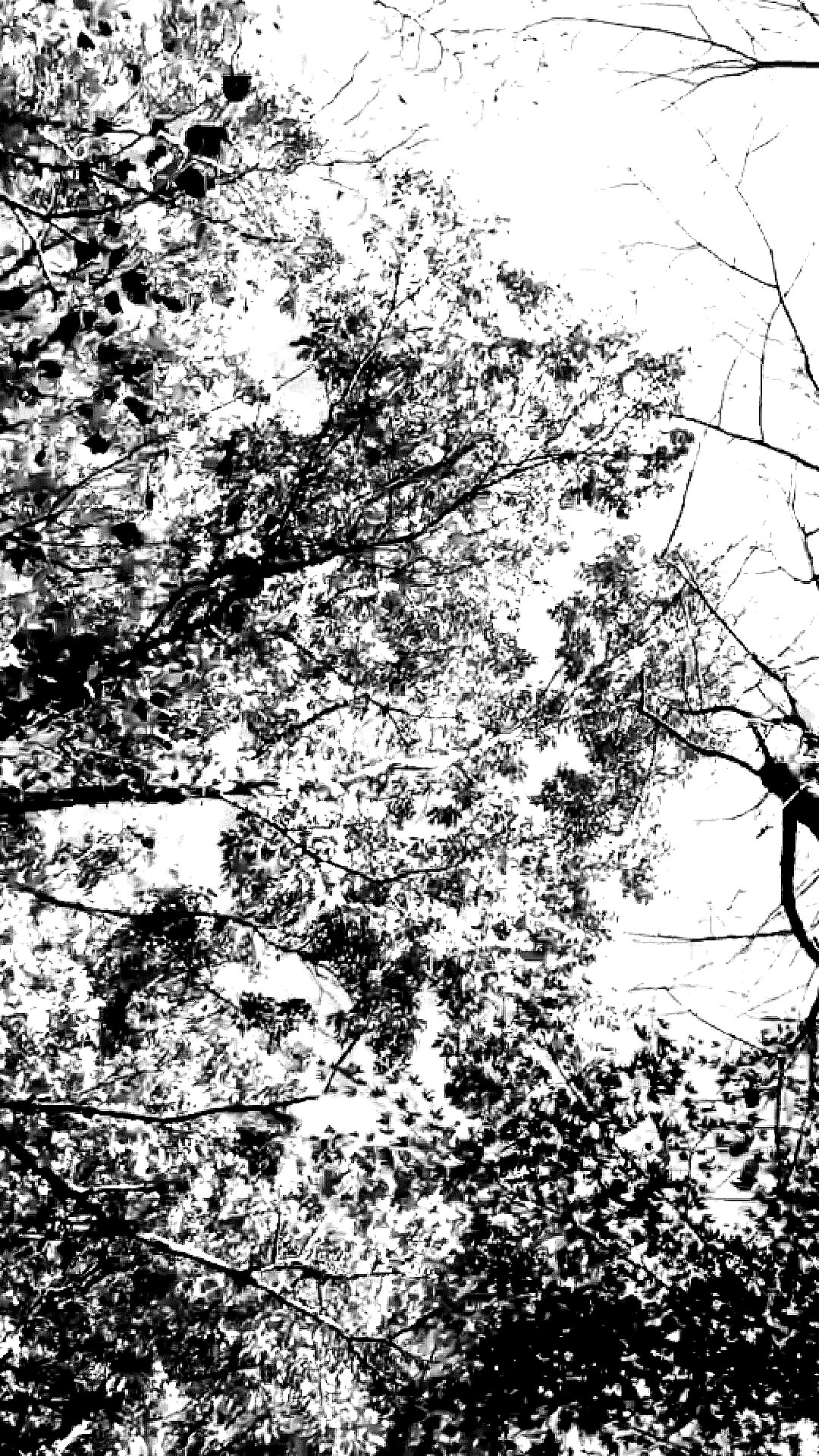 9900 Gambar Keren Hitam Putih Untuk Wallpaper Gratis
