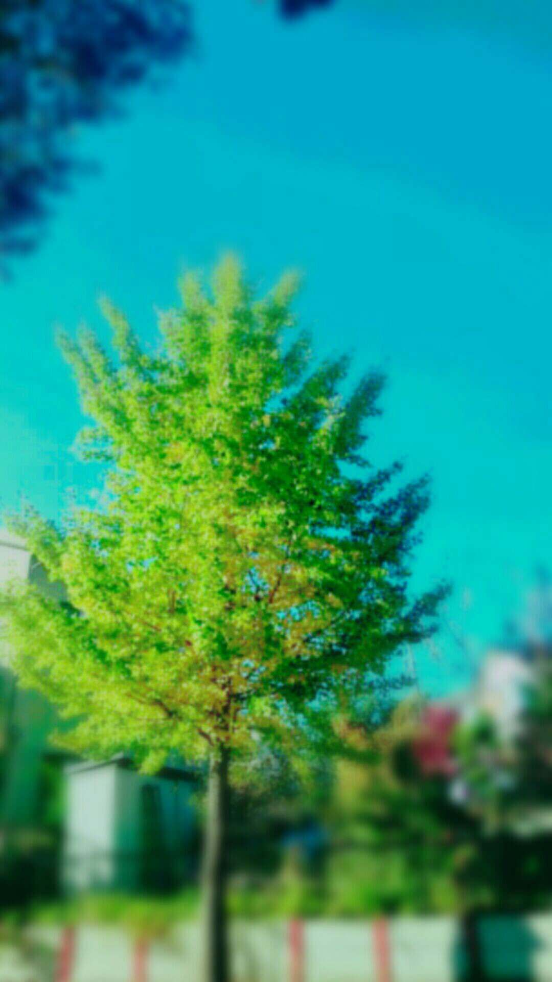 Pemandangan Pohon  wallpaper.sc Android
