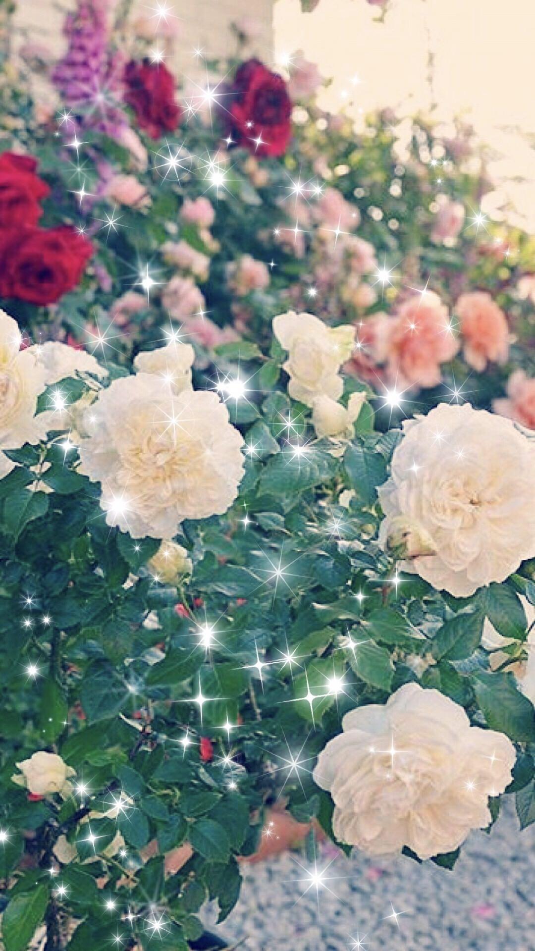Kebun Bunga Mawar Wallpapersc Android
