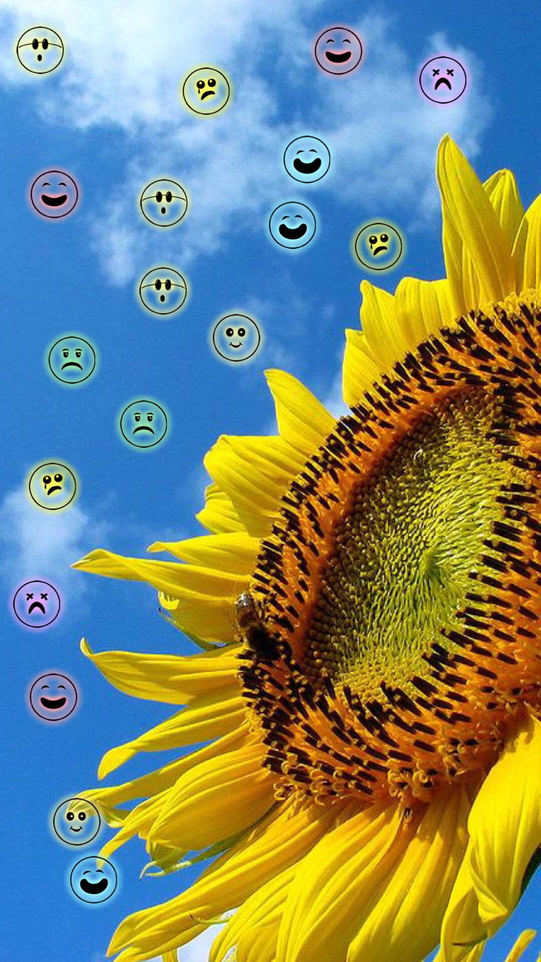 Wajah Bunga Matahari Wallpaper Sc Android