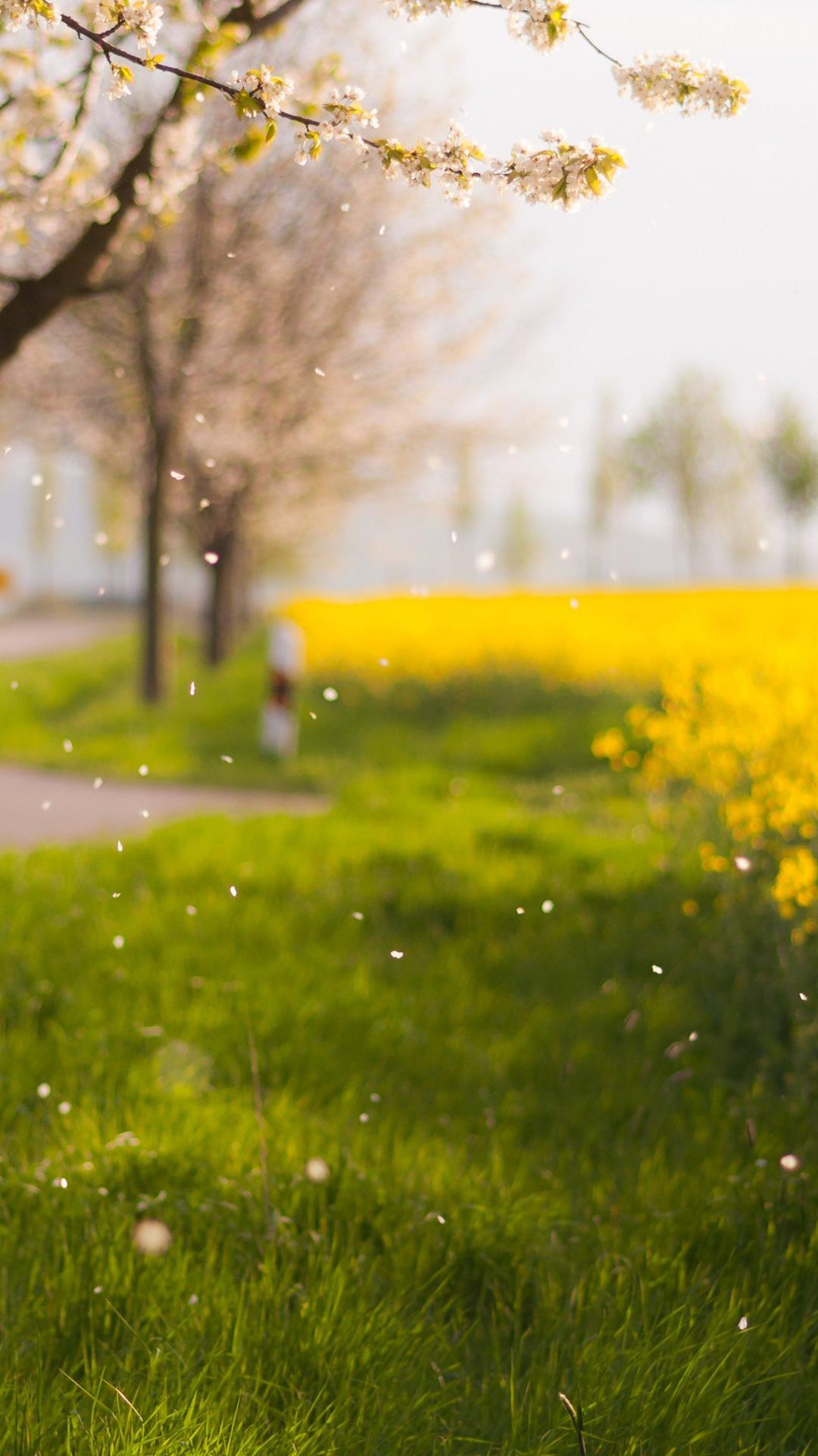 Unduh 860 Koleksi Background Rumput Kuning Paling Keren