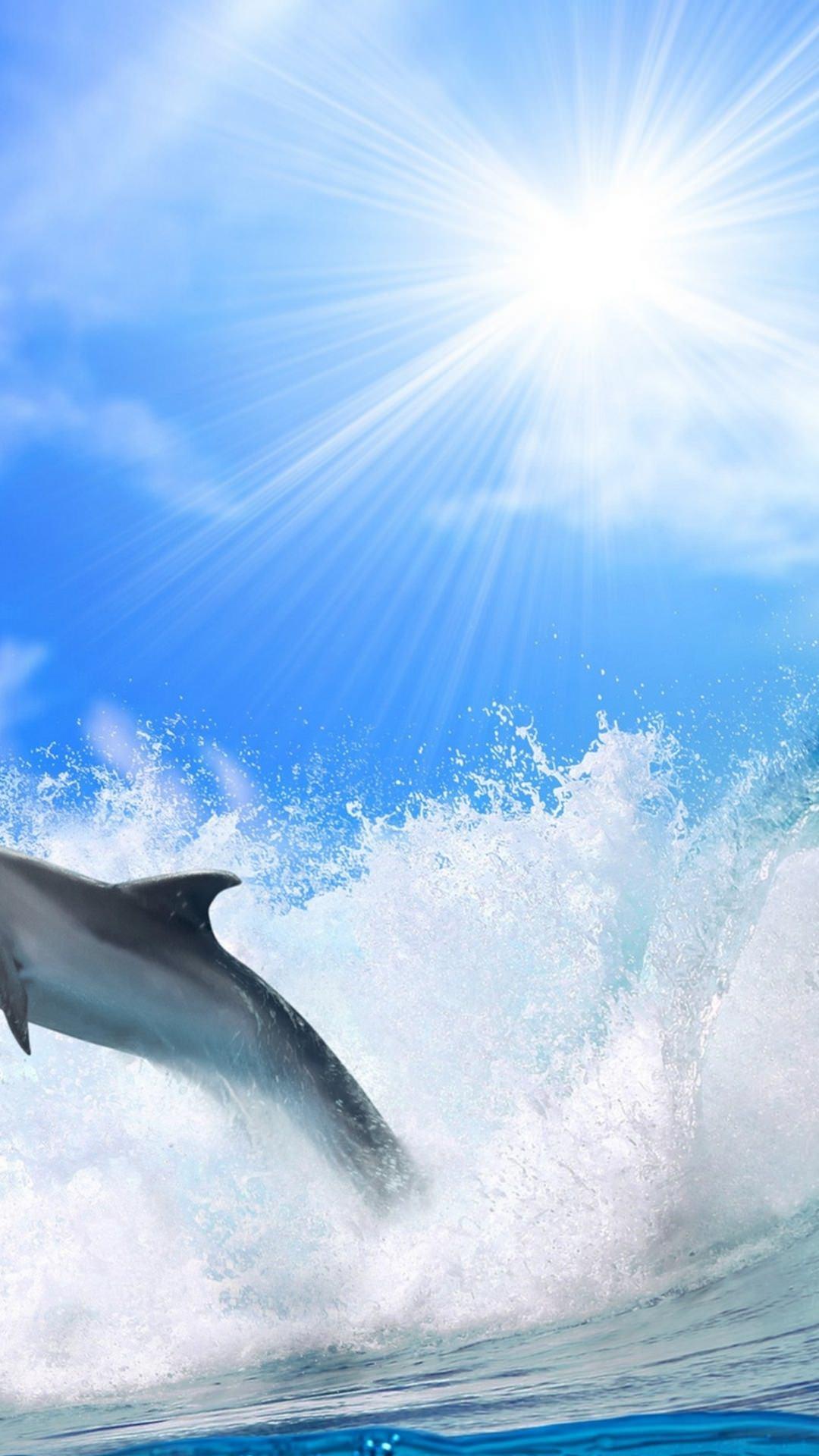 海イルカ太陽 Wallpaper Sc スマホ壁紙