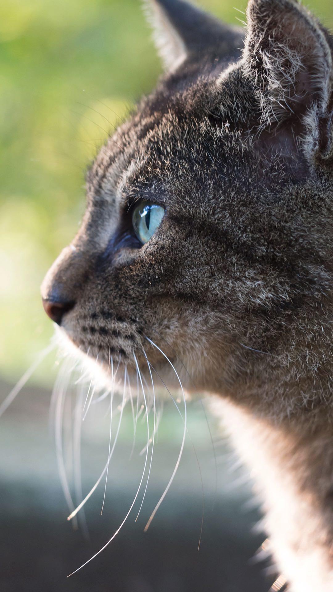 Unduh 93+  Gambar Kucing Lucu Wallpaper Terbaik