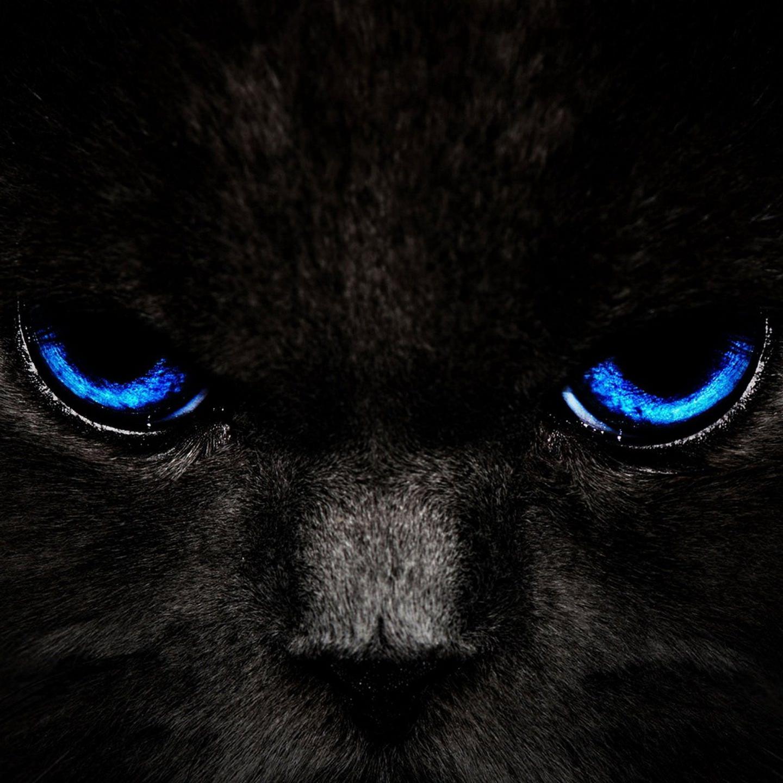 猫黒. スマホ 壁紙