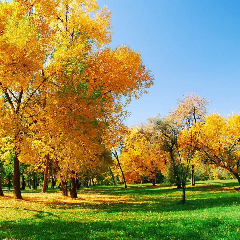 daun musim gugur kuning alami