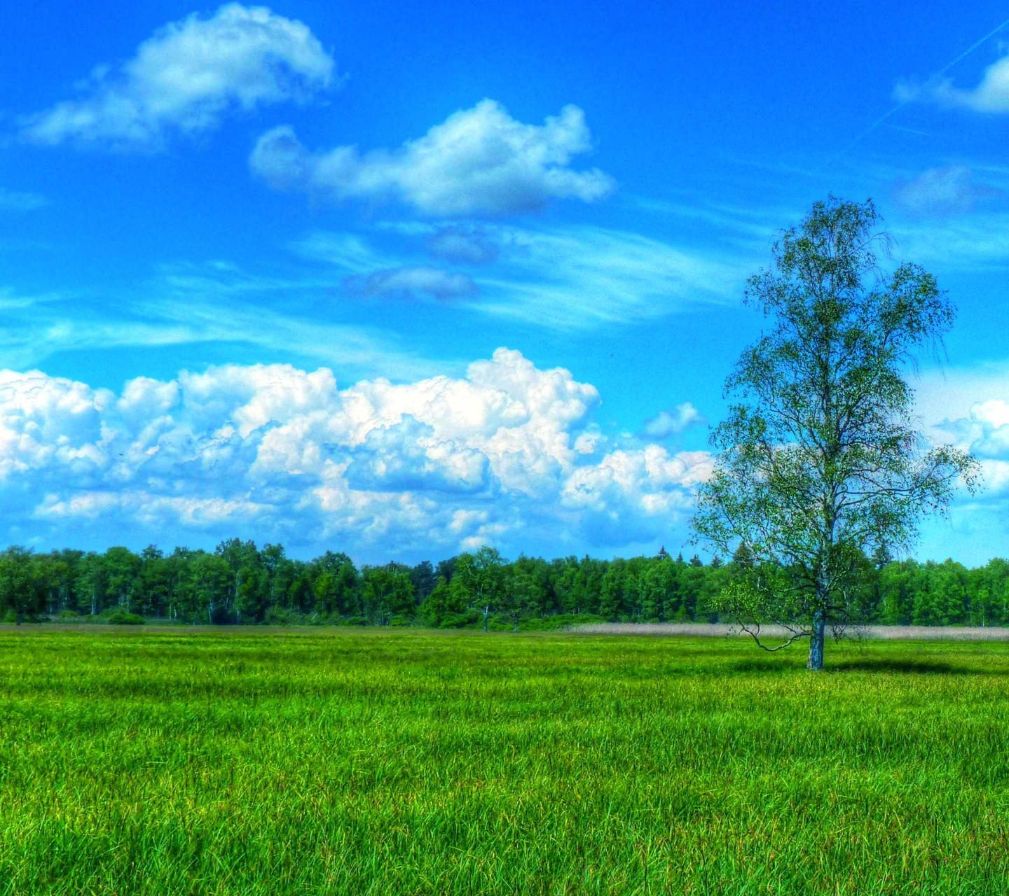 unduh 7200 background pemandangan rumput hd paling keren download background unduh 7200 background pemandangan