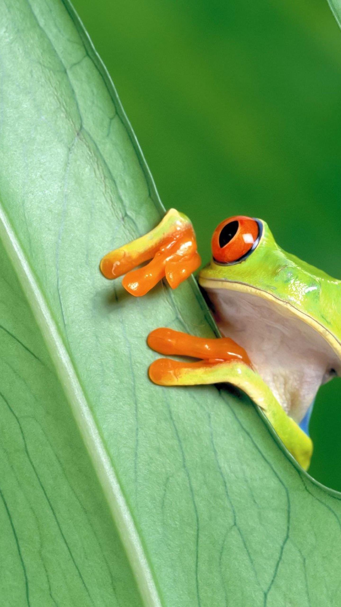 動物カエル緑 Wallpaper Sc スマホ壁紙