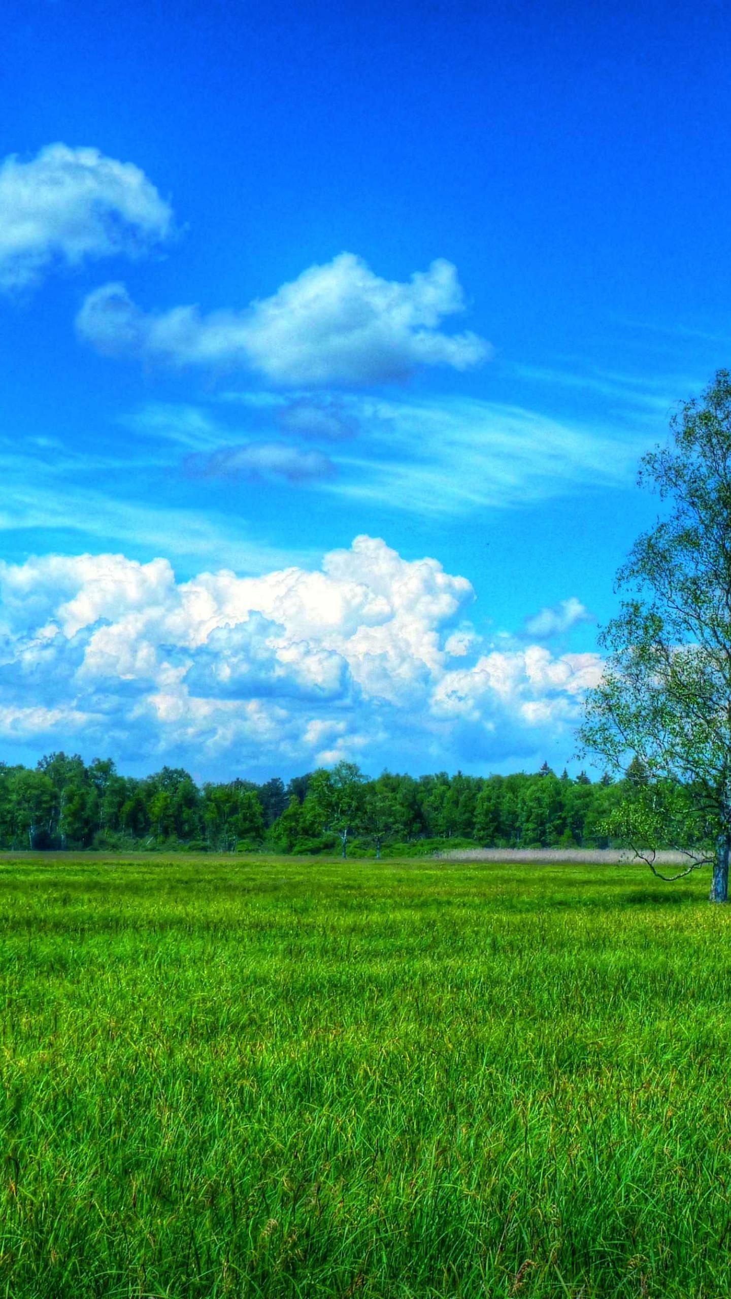 風景自然緑青 Wallpaper Sc スマホ壁紙