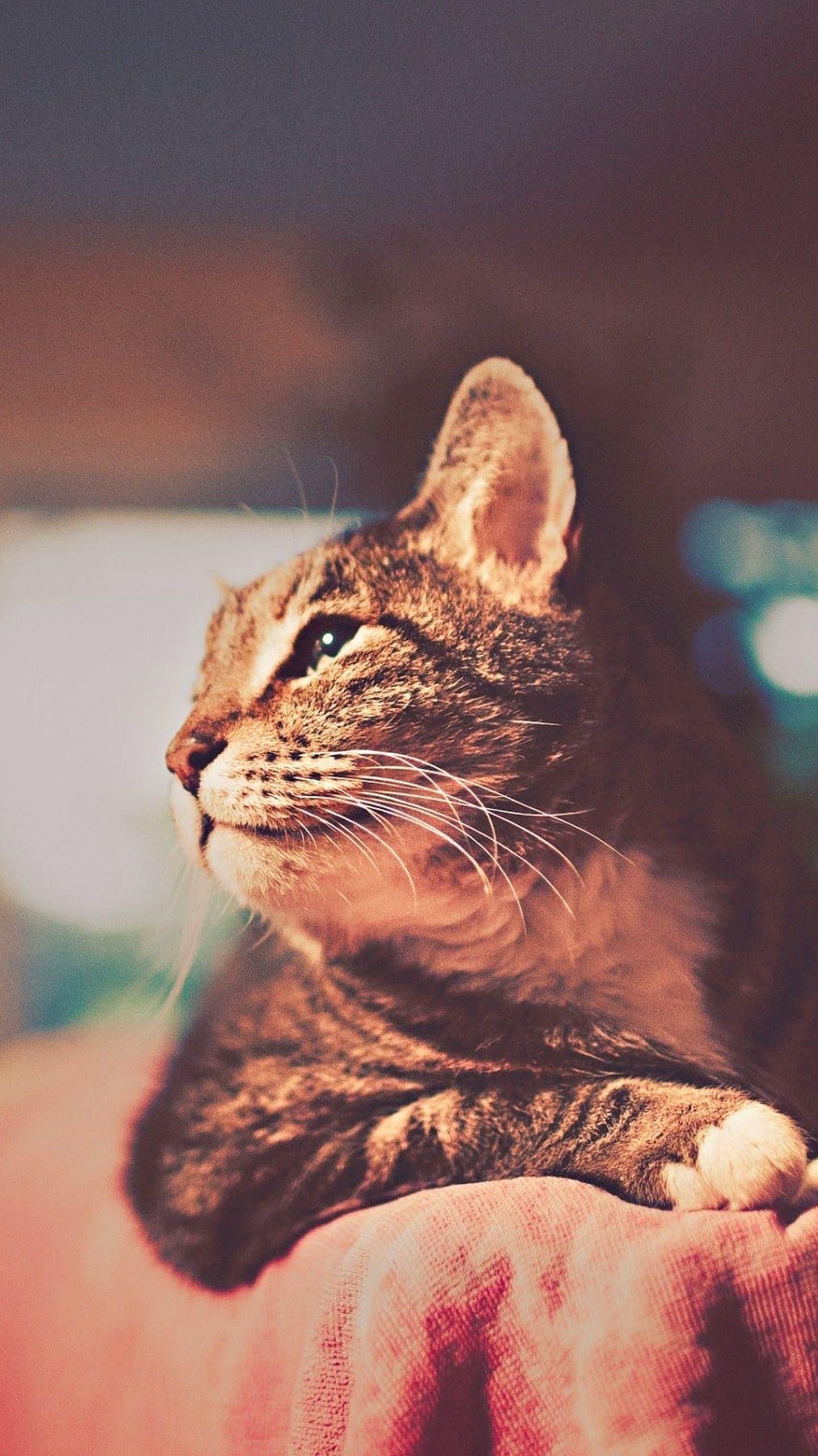 Cool Cat Wallpaper Sc Smartphone