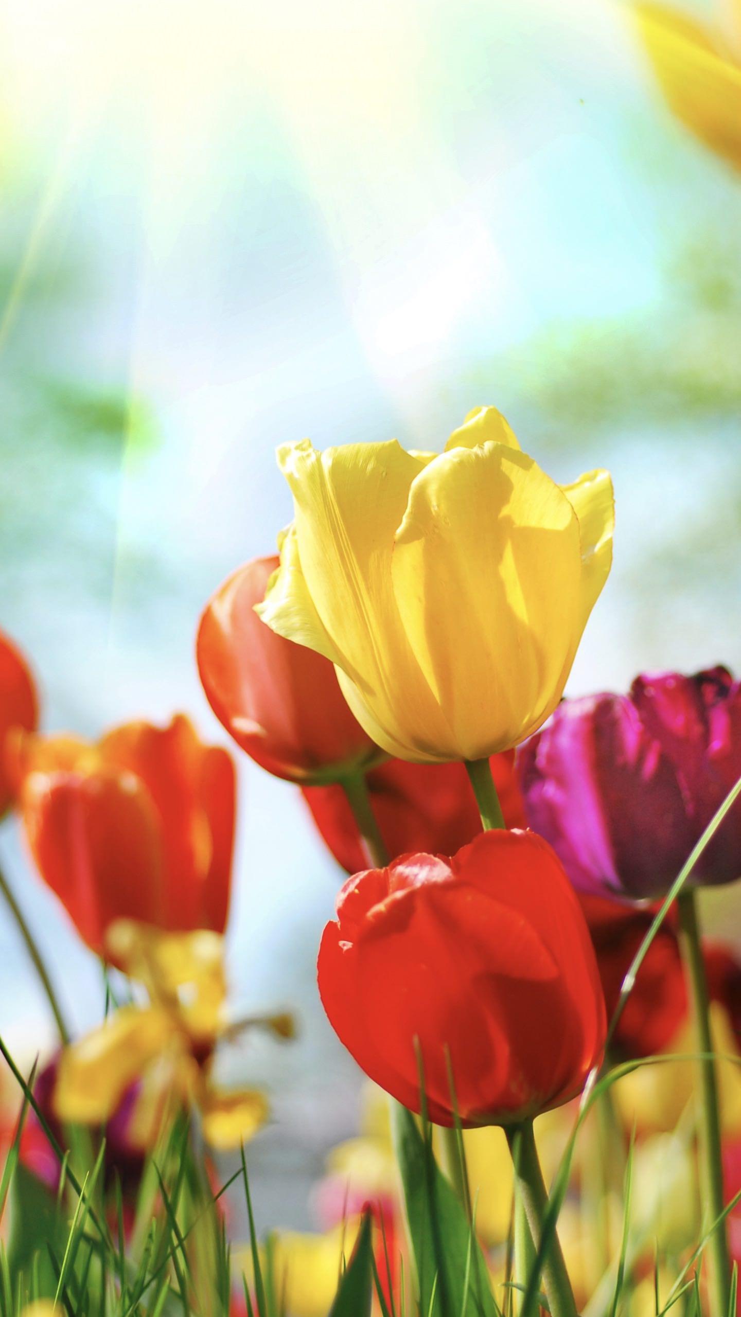 bunga tanaman berwarna warni android smartphone wallpaper