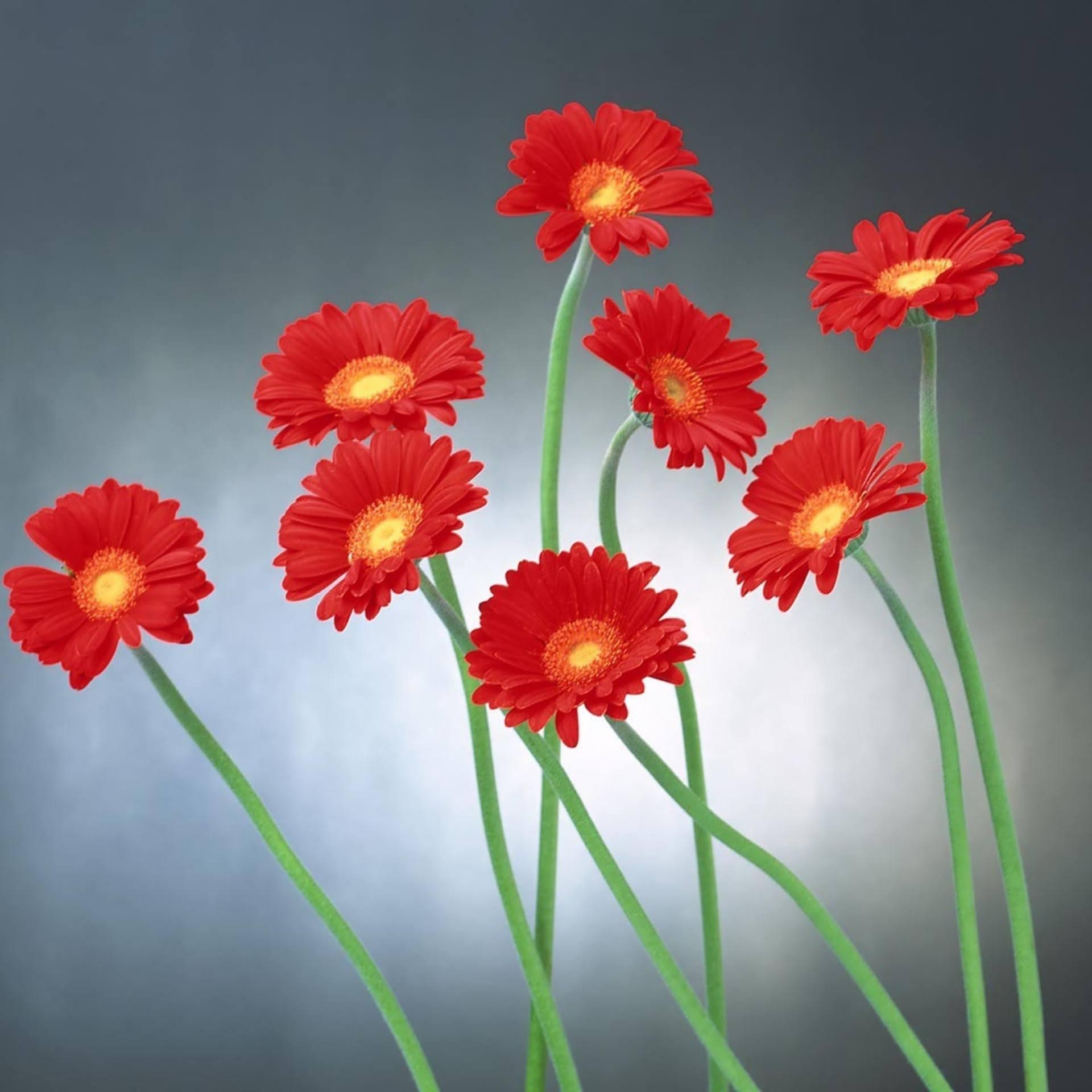 merah bunga alami