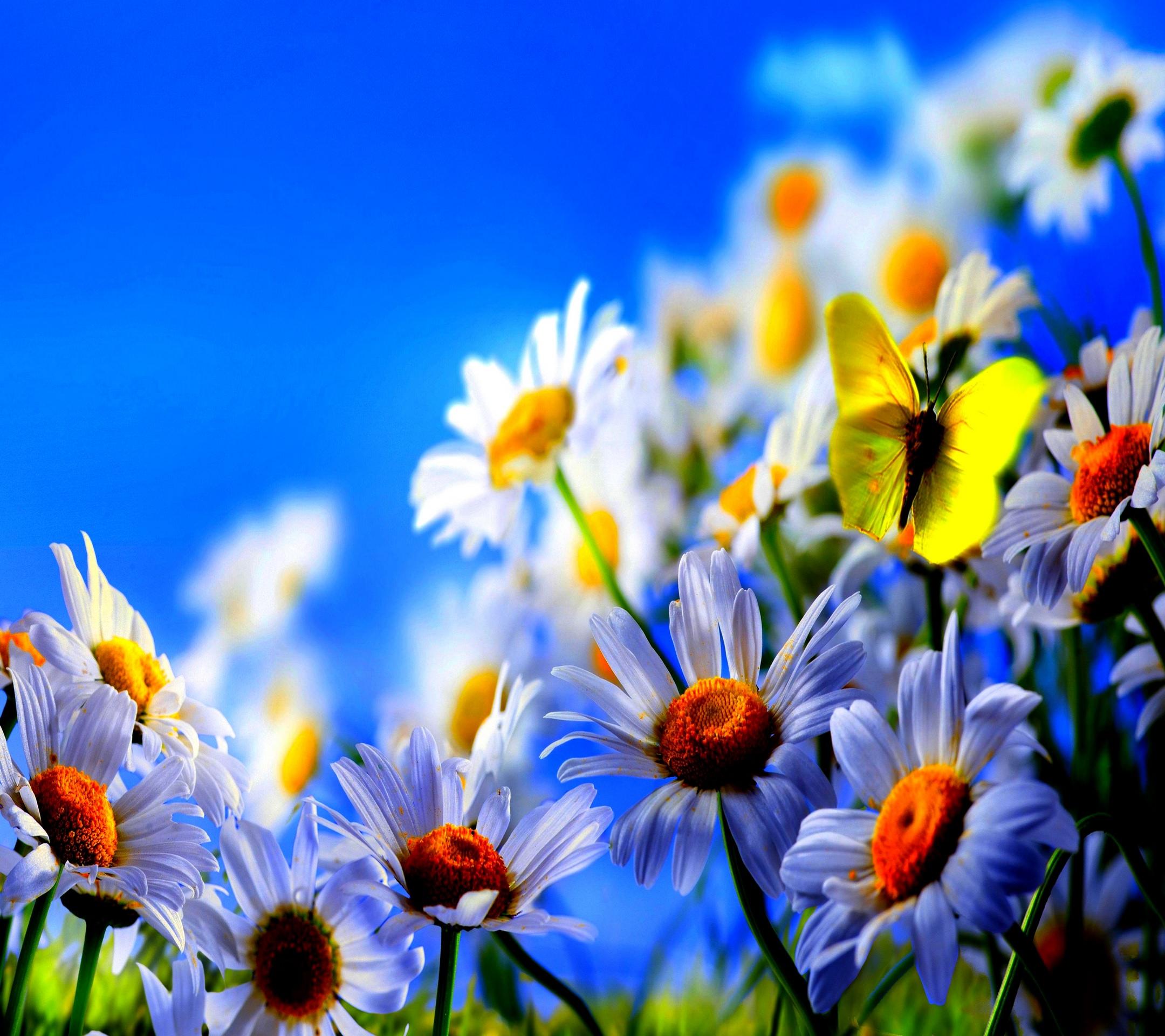 Biru Bunga Alami Wallpapersc Android