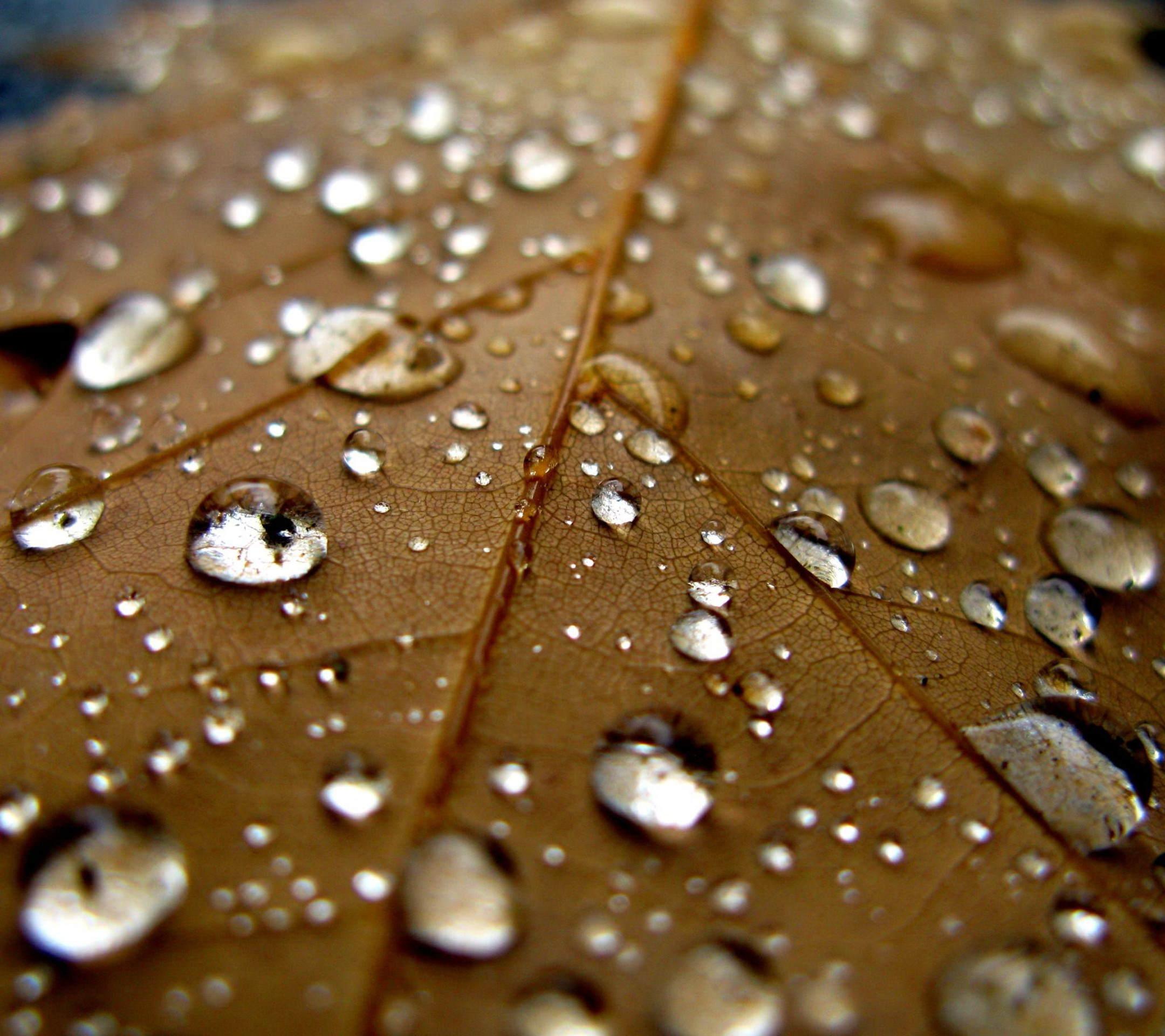 Natural Water Drops Leaf Tea Wallpaper Sc Smartphone