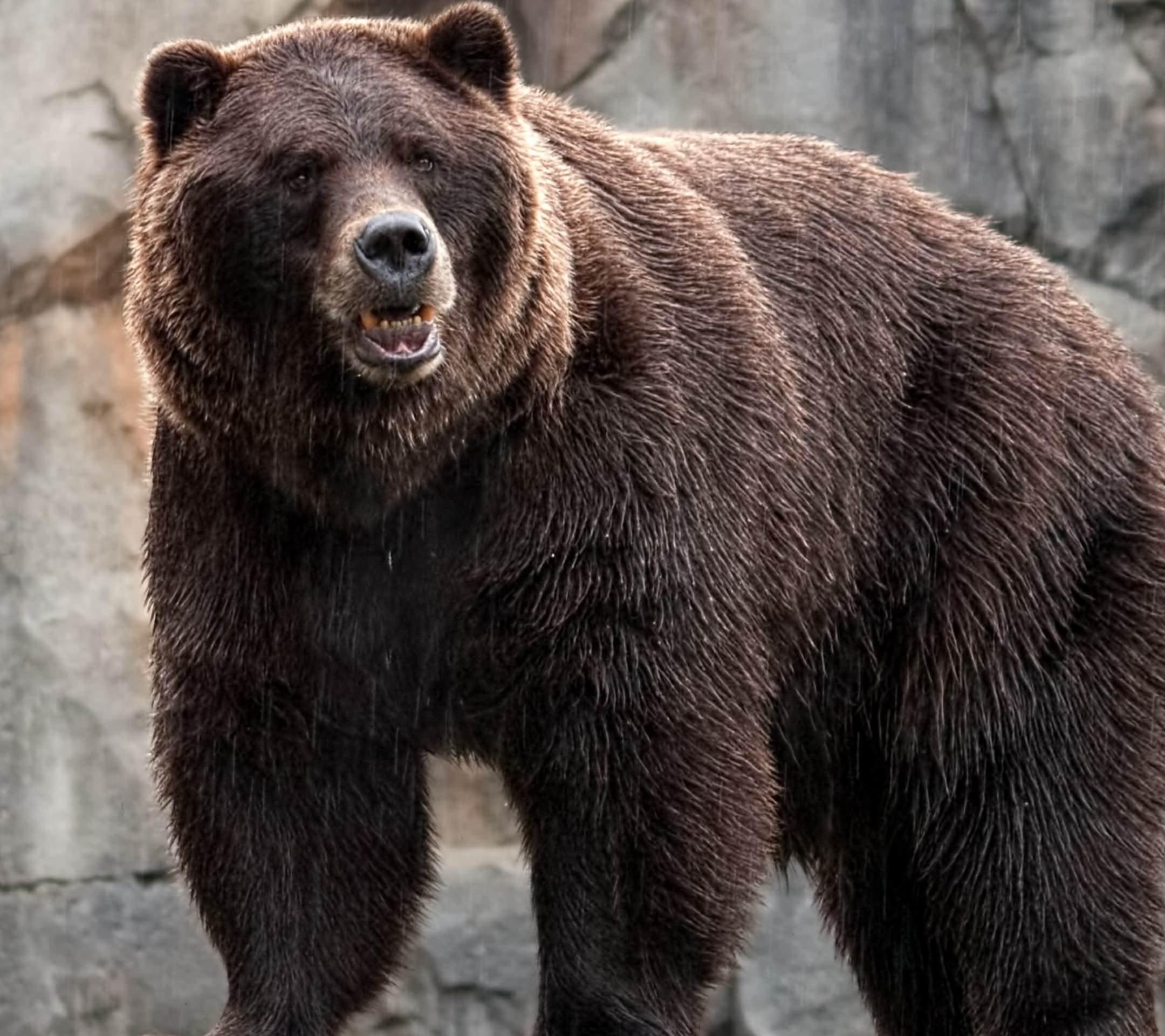 怖いけどカワイイ熊の高画質な画像まとめ!