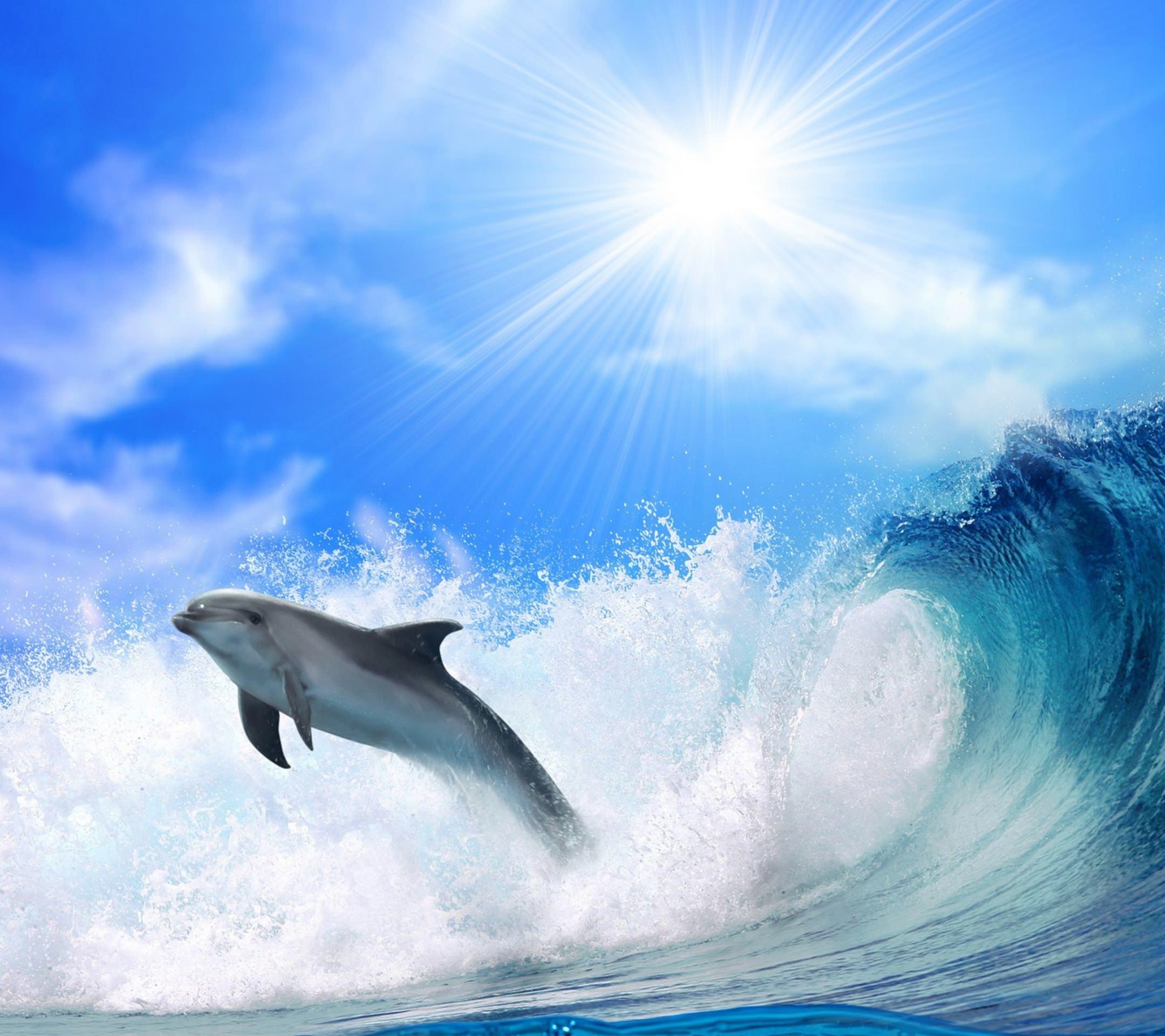 Sea Dolphin Sun Wallpaper Sc Smartphone