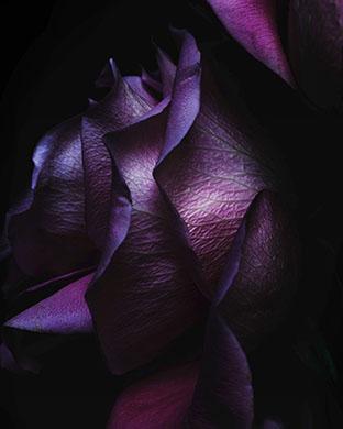 Ablackflowerflowerspurple Le Watch Photo Face Wallpaper Image