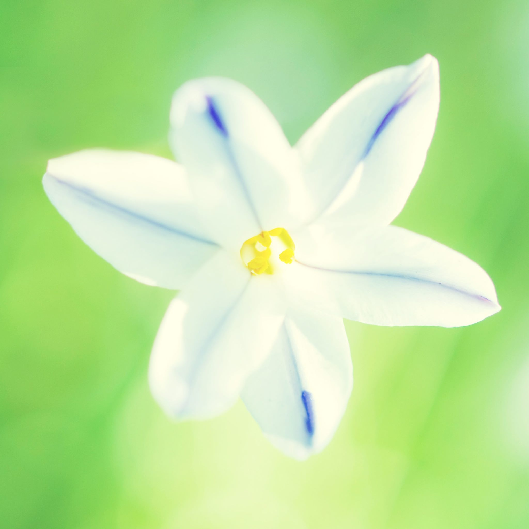 iPad iPad mini wallpaper