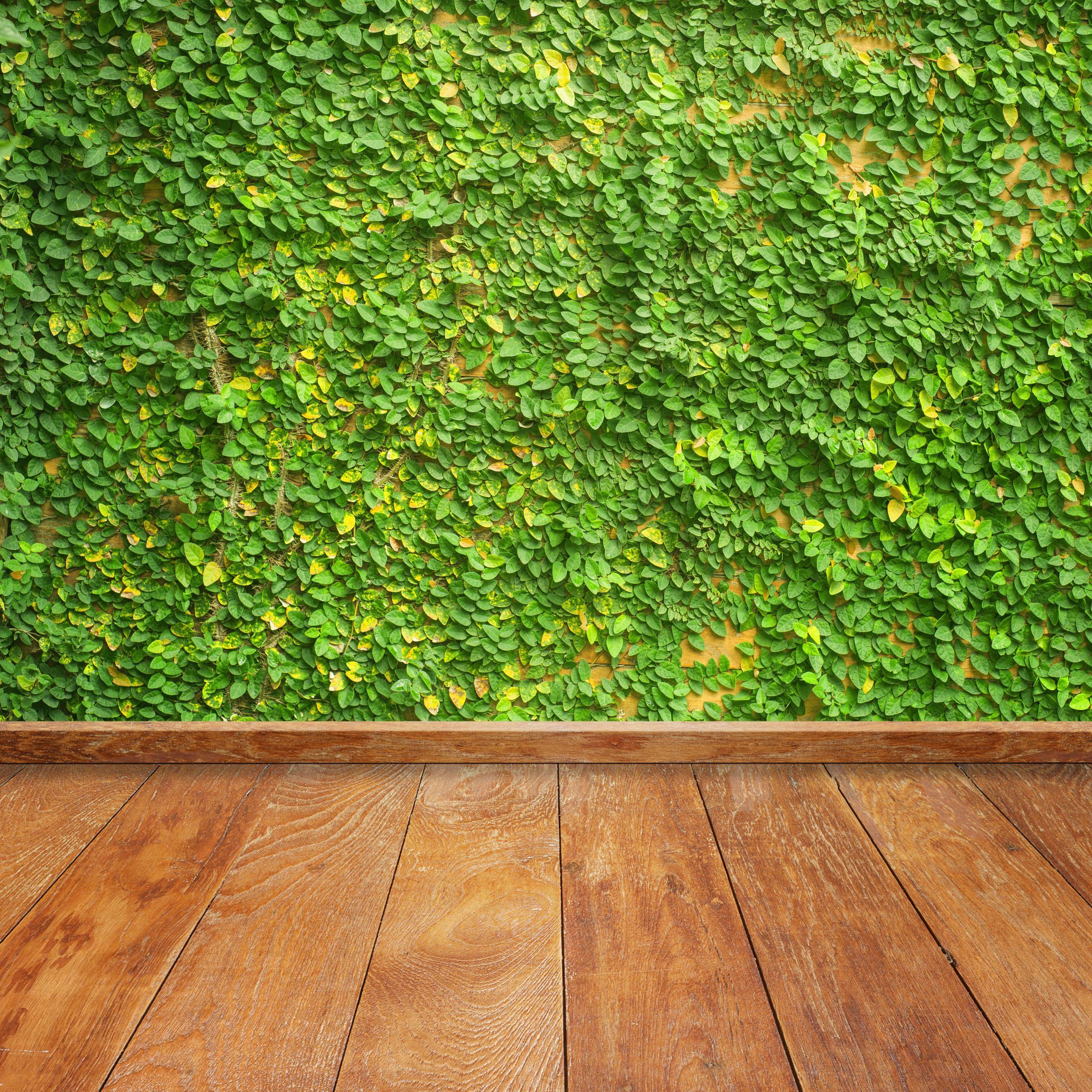 green wall ivy floorboards ipad