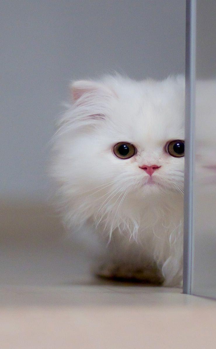 котята фото для айфона сливочное масло