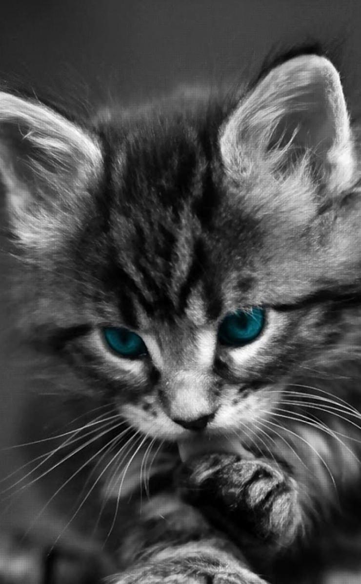 Black Cat Kitten Wallpaper Sc Iphone4s