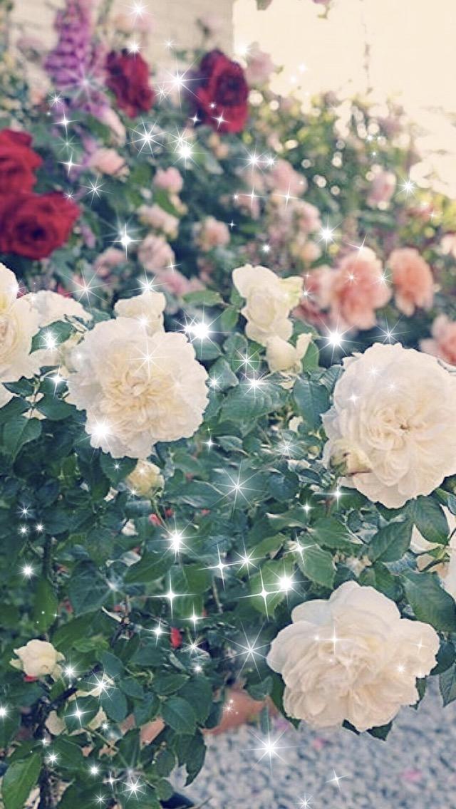 Download 80 Wallpaper Hp Gambar Bunga HD Paling Keren