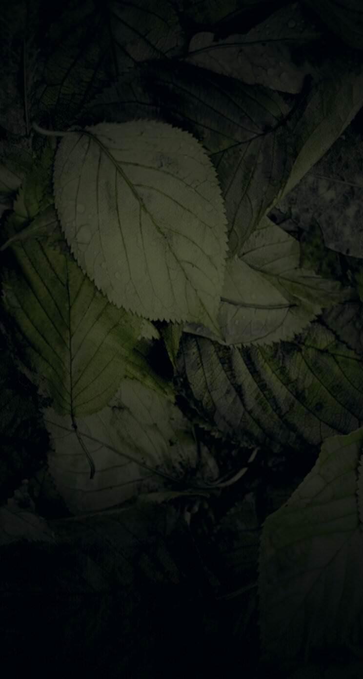 自然落ち葉黒 Wallpaper Sc Iphone5s Se壁紙