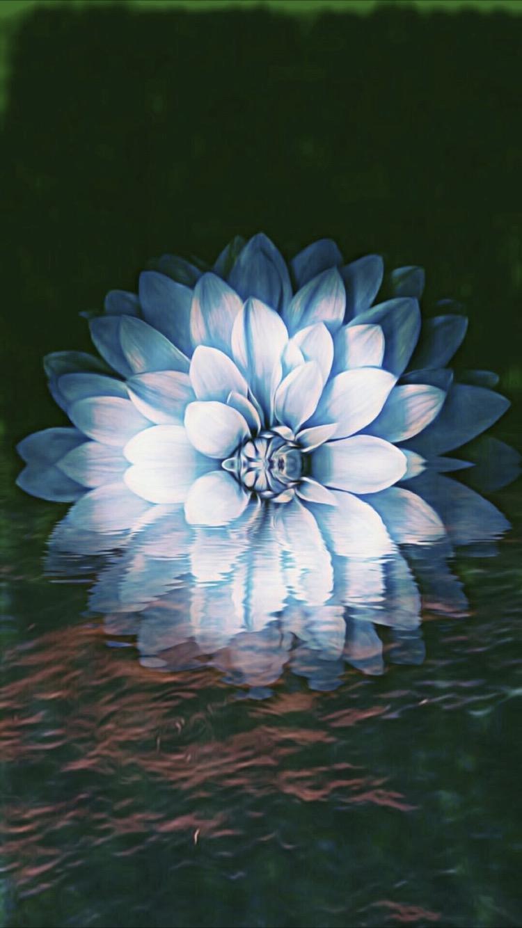 530 Koleksi Gambar Wallpaper Bunga Keren Gratis Terbaik
