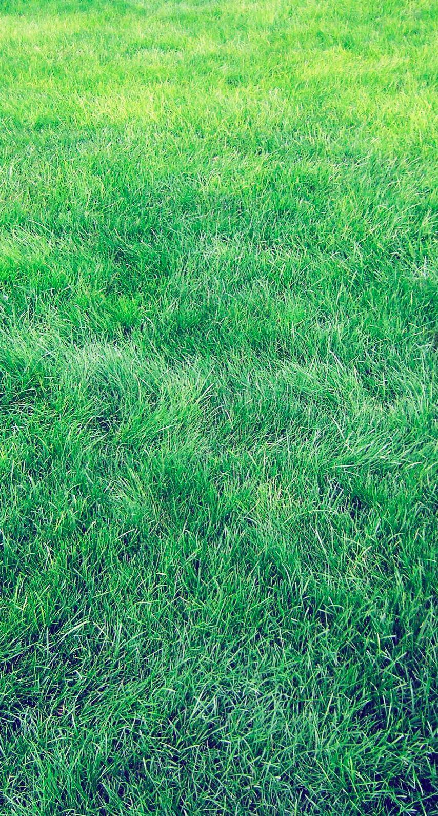 Natural Grass Green Wallpaper Sc Iphone6s