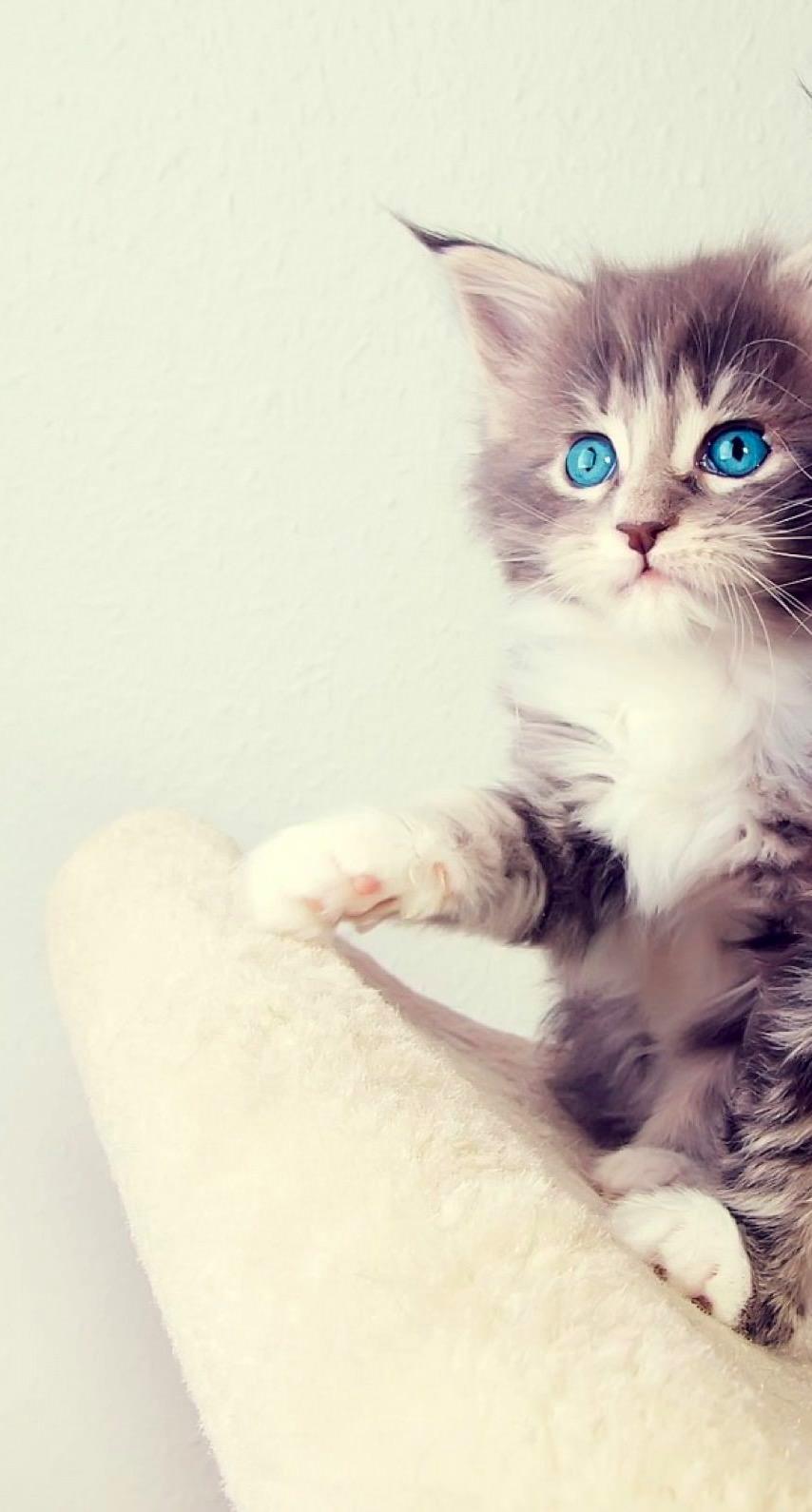 動物猫の iPhone6s / iPhone6 壁紙