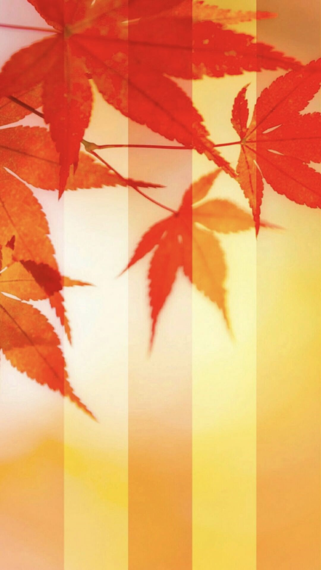 紅葉 秋 Wallpaper Sc Iphone6splus壁紙
