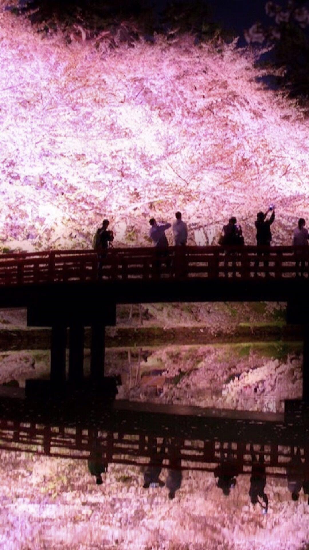 桜 ライトアップ Wallpaper Sc Iphone6splus壁紙