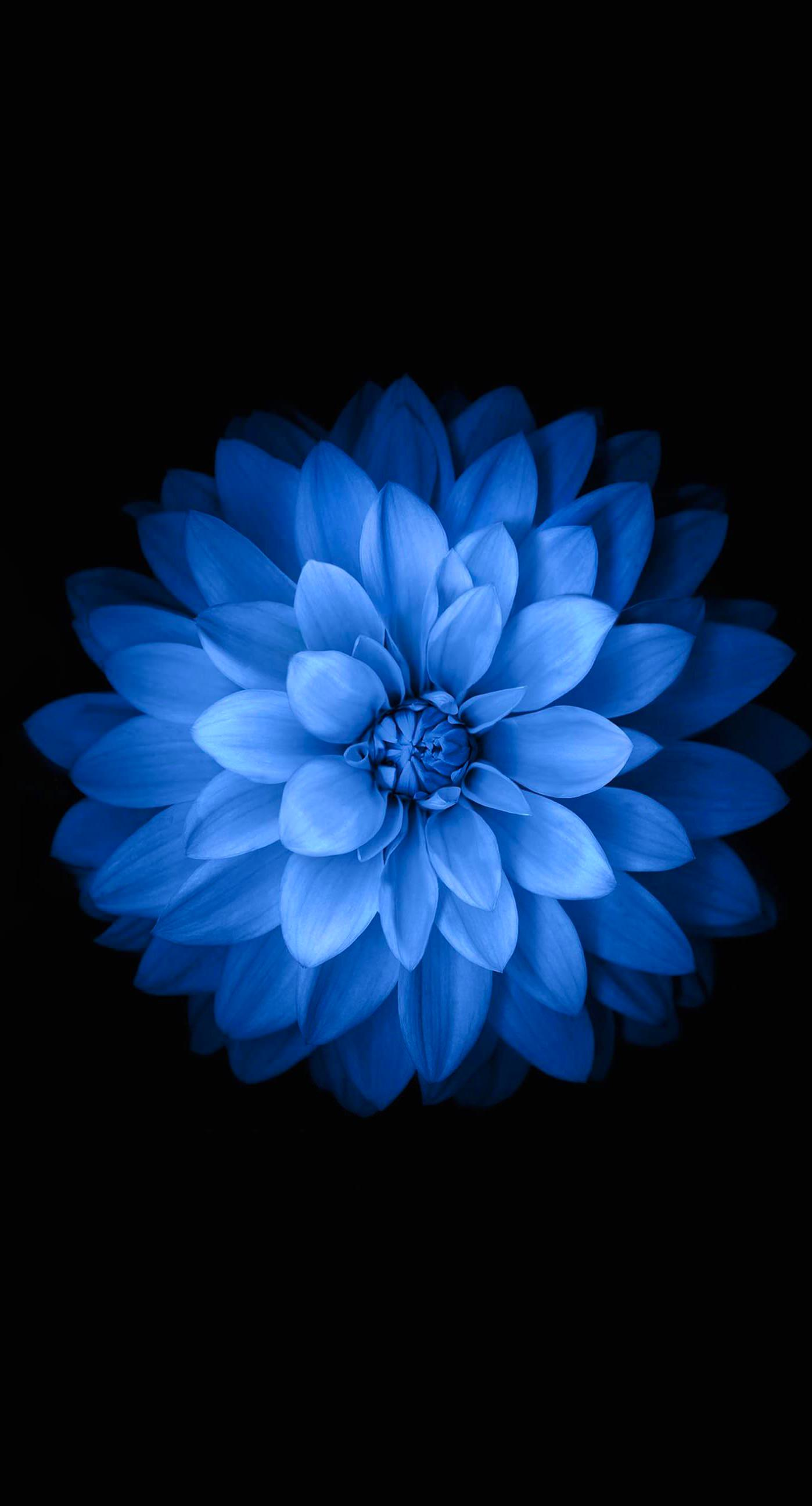 Blue black flower