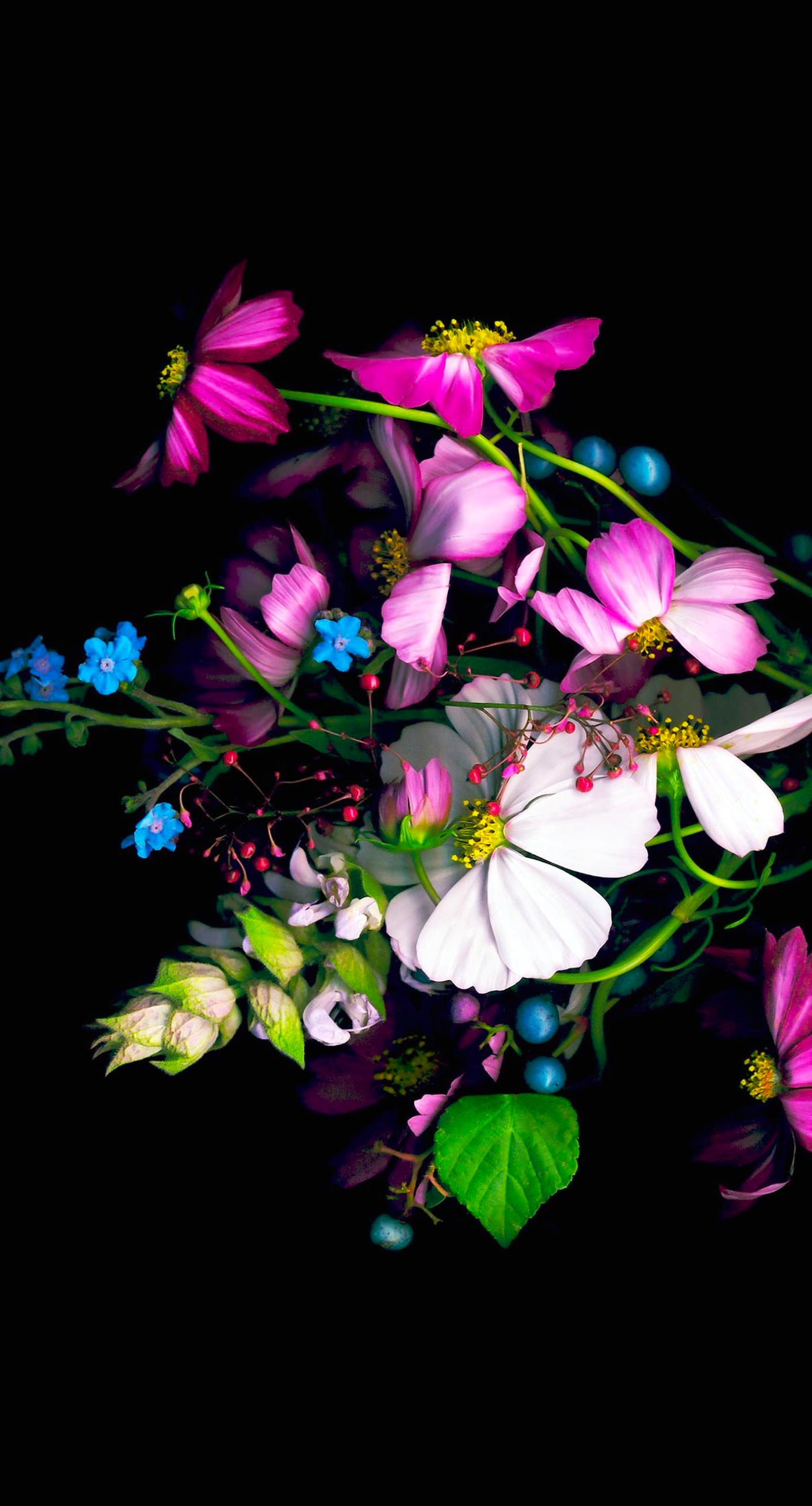 Colorful Flower Black Wallpaper Sc Iphone6splus