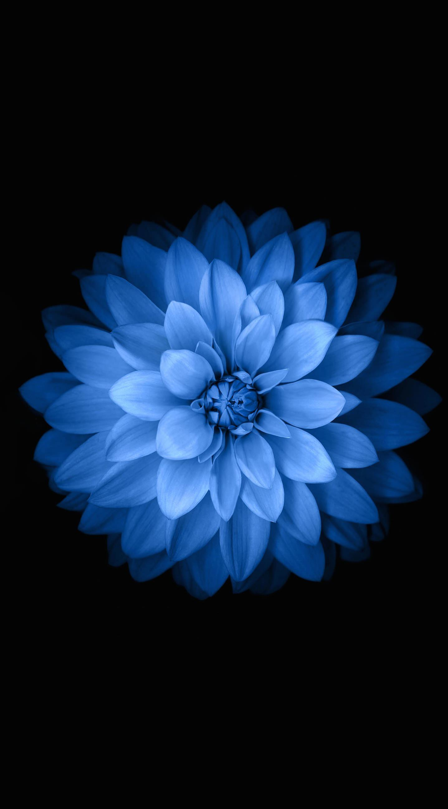 Iphone wallpaper ios 7 tumblr - Blue Black Flower Wallpaper Sc Iphone6splus