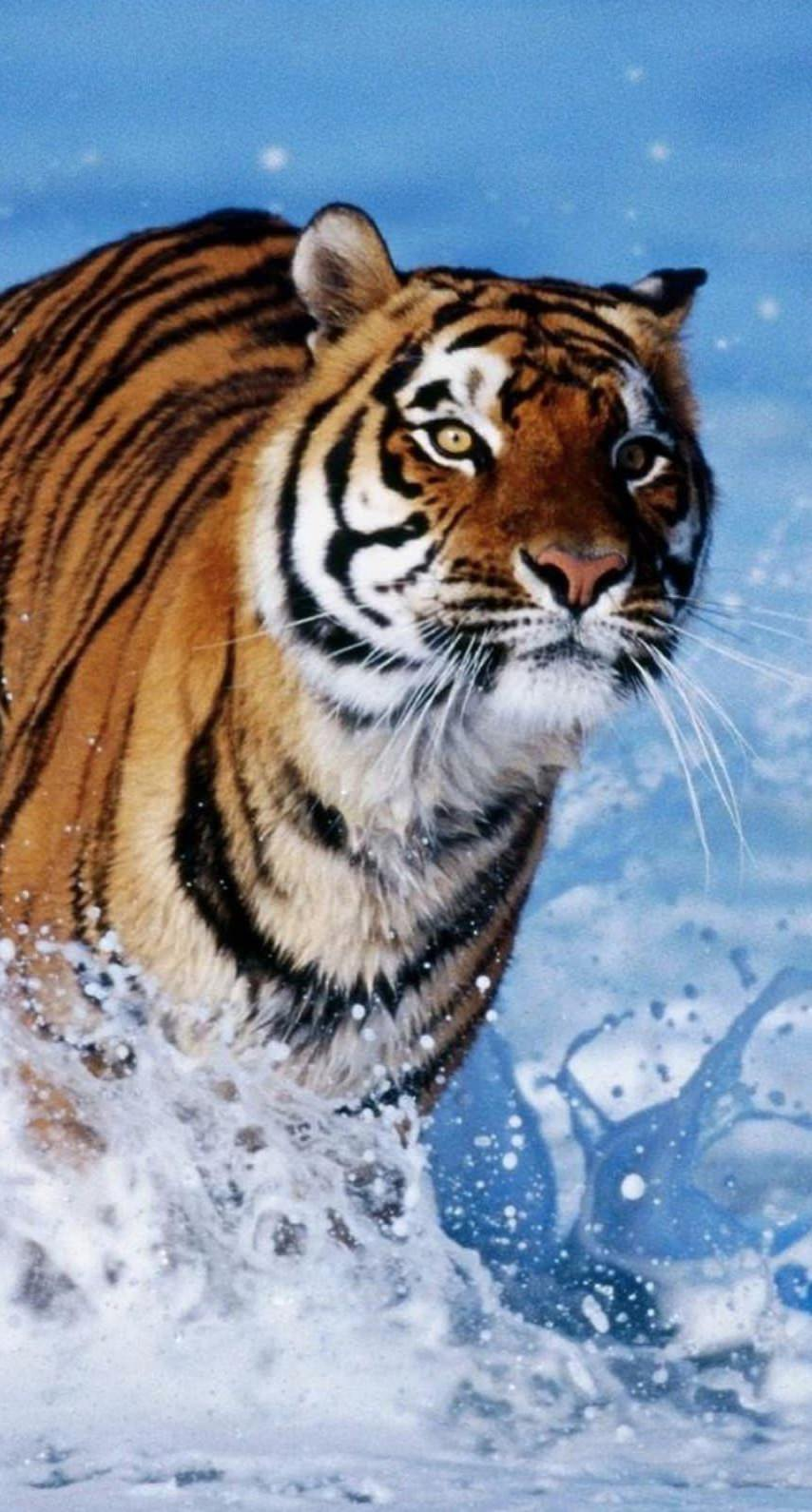 Animal Tiger Wallpaper Sc Iphone7