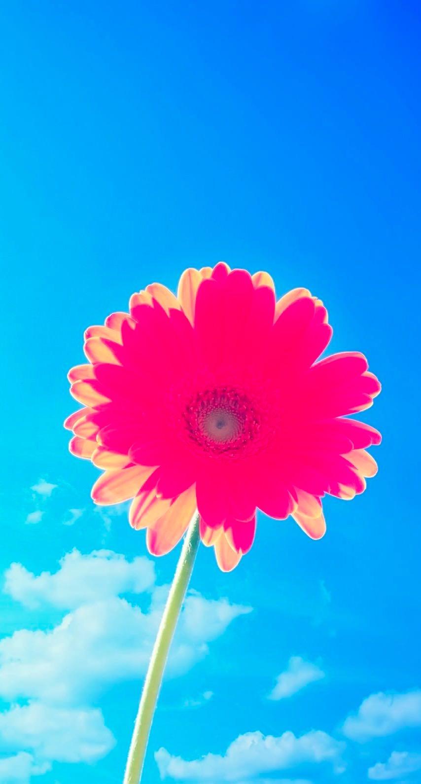 Flower Sky Blue Red Wallpaper Sc Iphone7