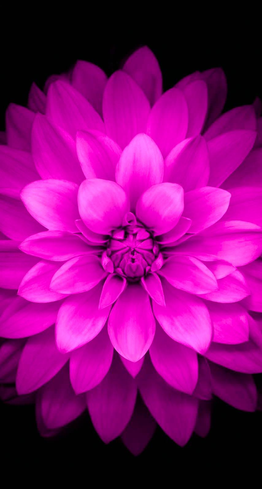Flowers Purple Black Wallpapersc Iphone7