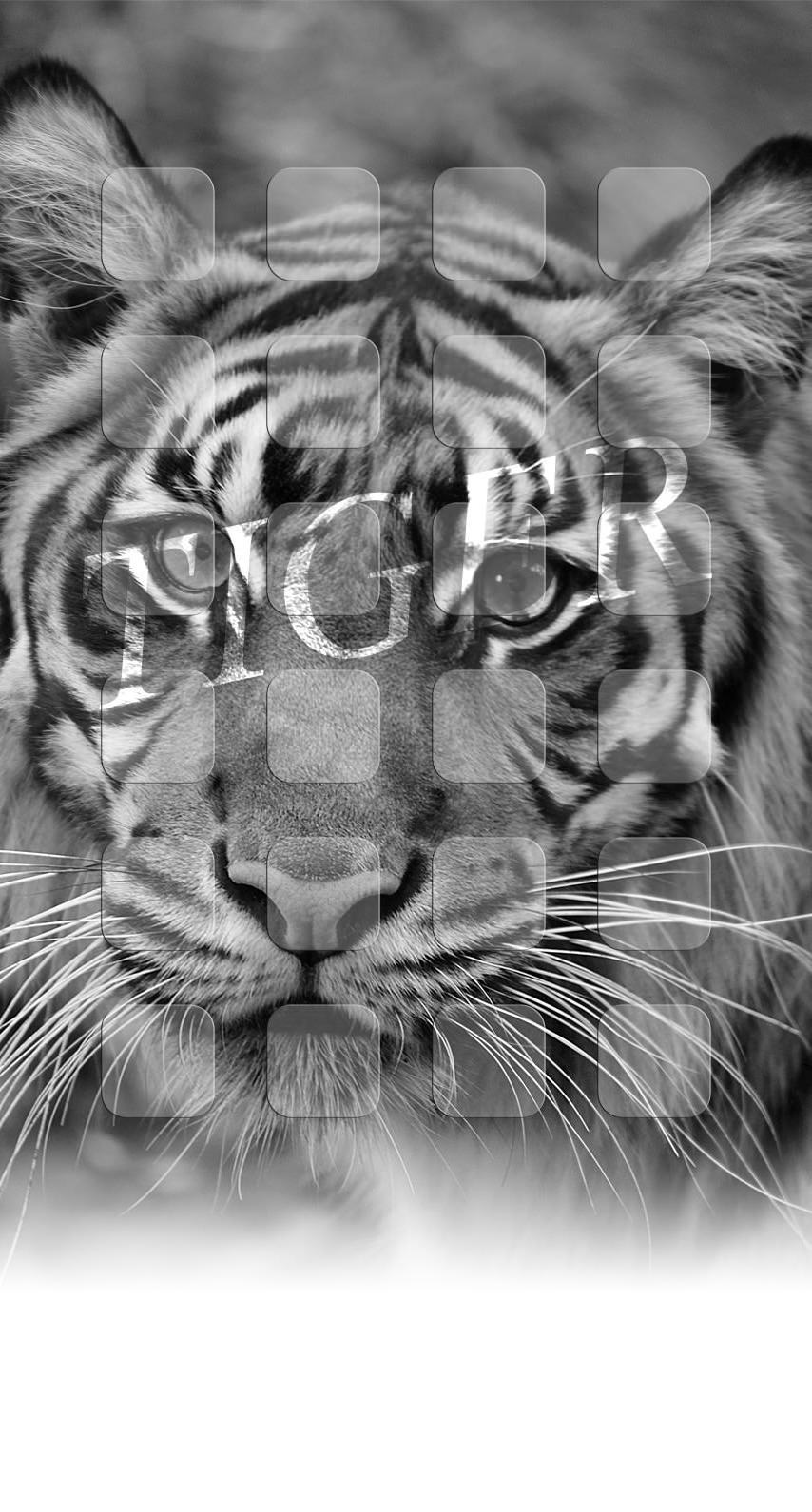 Animal Tiger Monochrome Shelf Wallpaper Sc Iphone7
