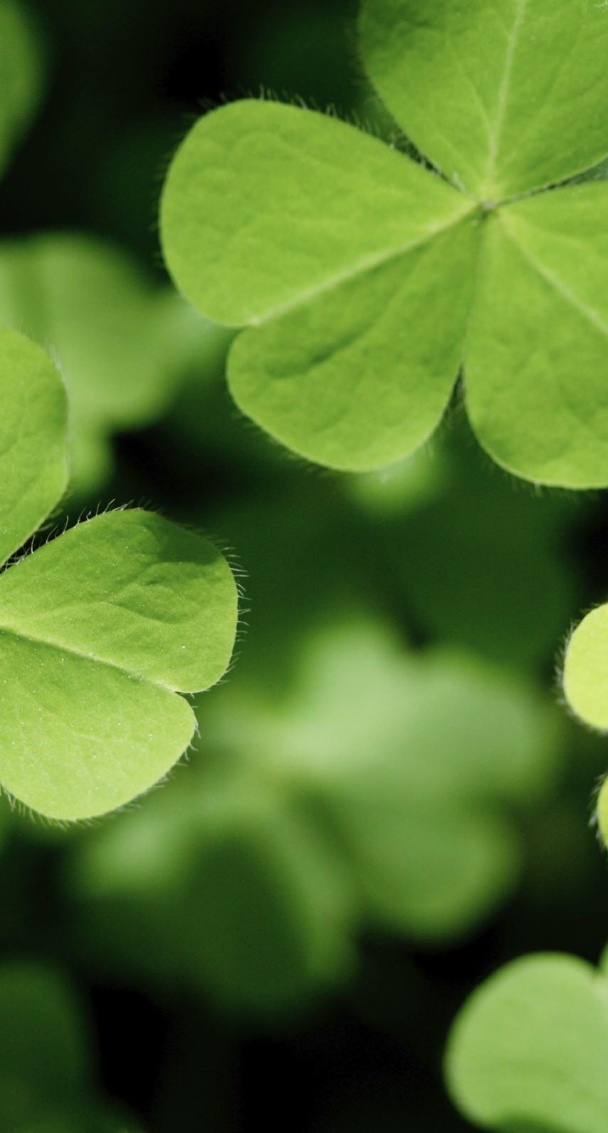クローバー植物緑 Wallpaper Sc Iphone7壁紙