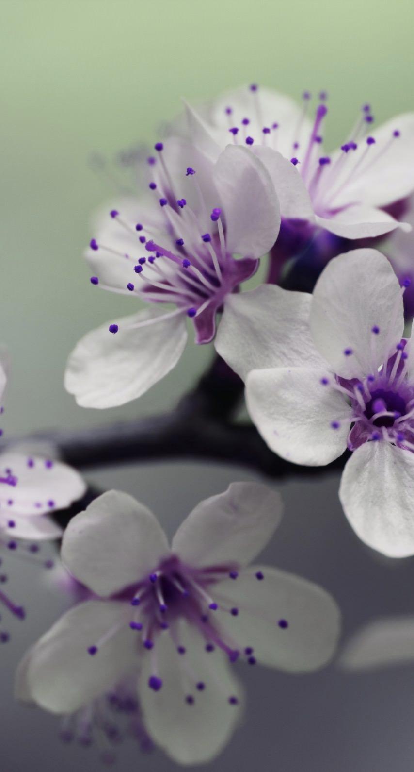 Purple Flower Iphone 7 Wallpaper Flowers Healthy
