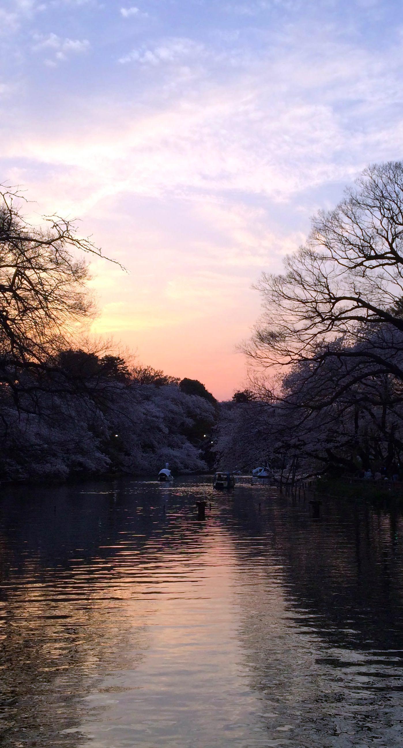 Pemandangan Kolam Matahari Terbenam Wallpapersc IPhone7Plus