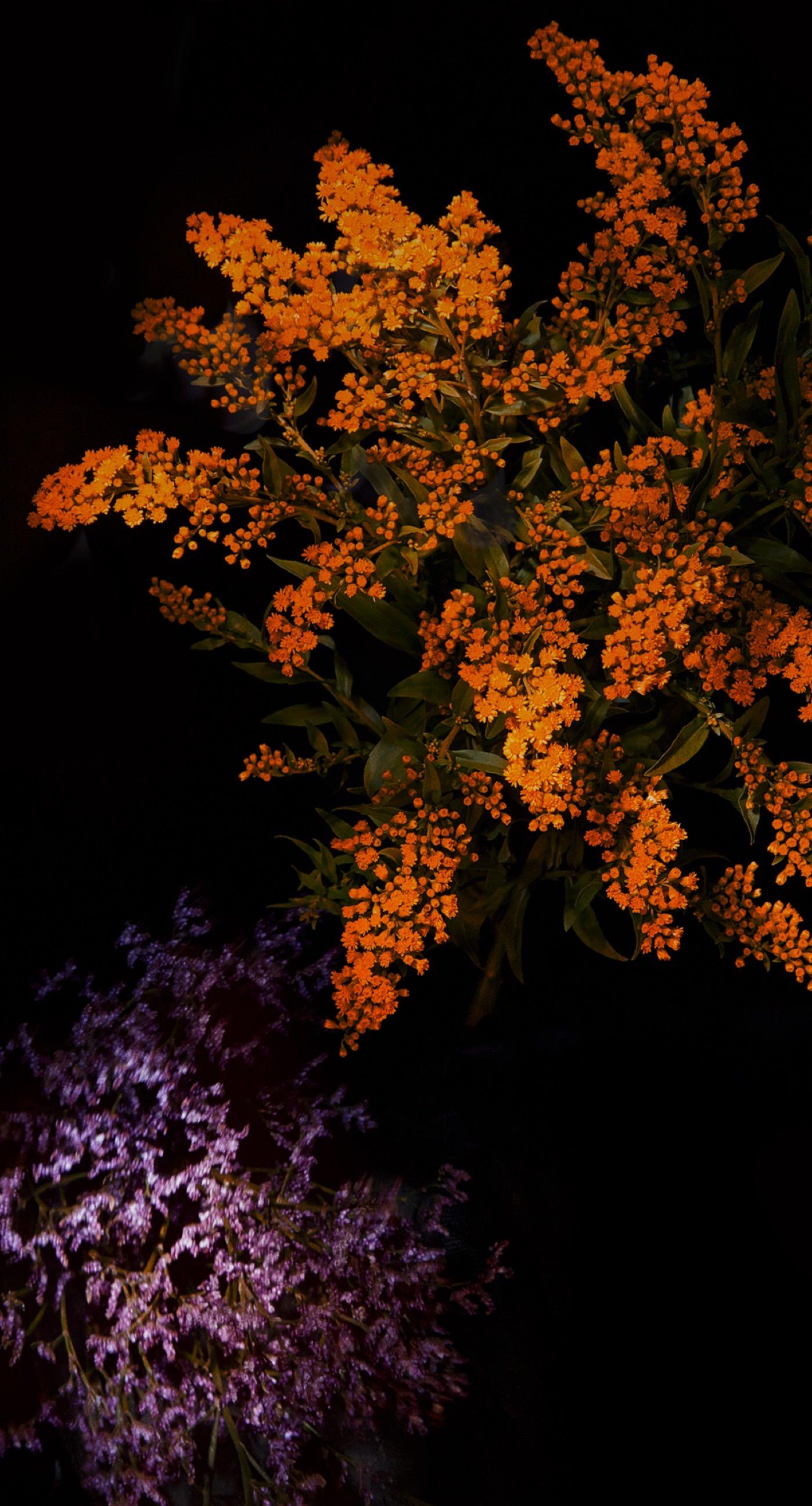 Orange Flower Cool Ios9 Wallpaper Sc Iphone7plus