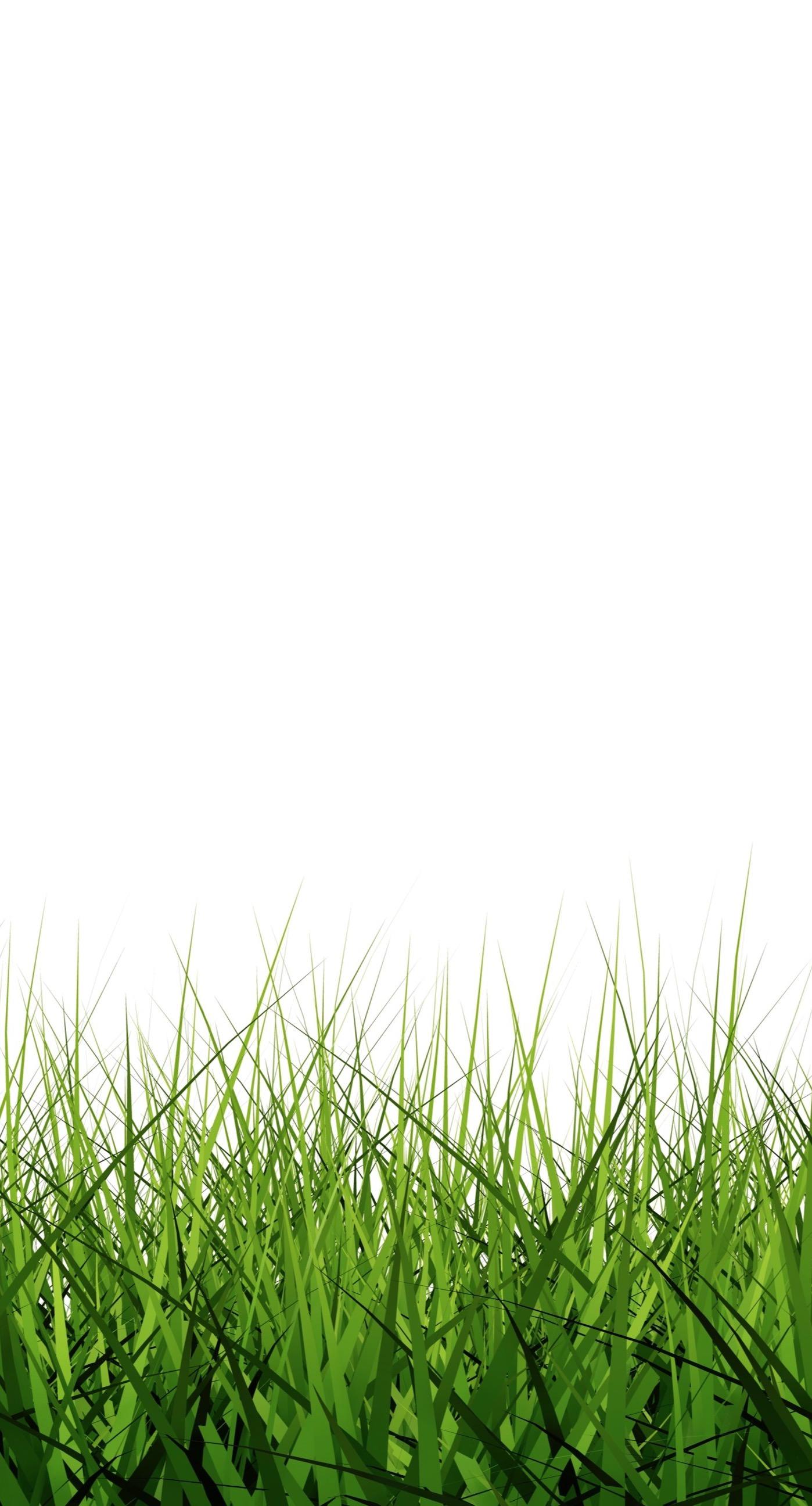 Gambar Ilustrasi Rumput   Iluszi