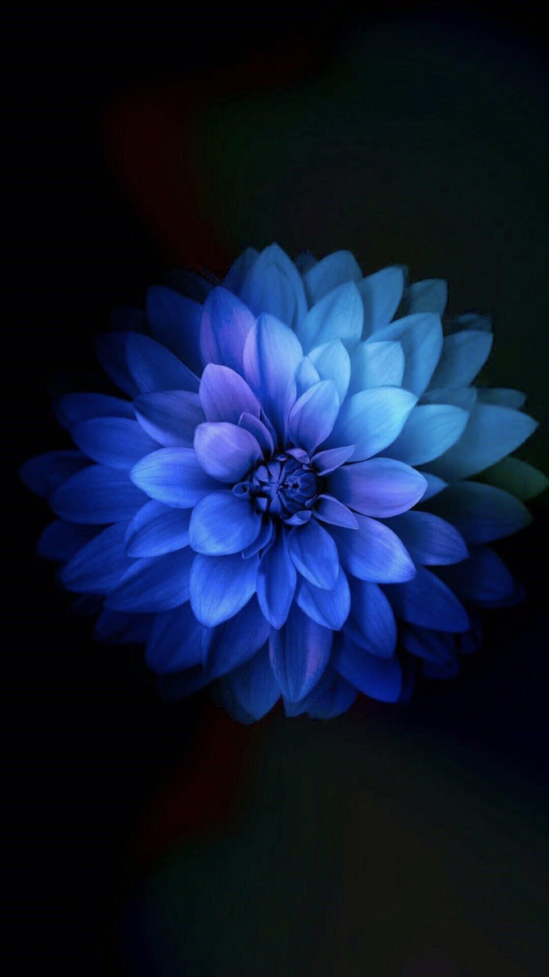 3000+ Wallpaper Bunga Biru  Terbaik