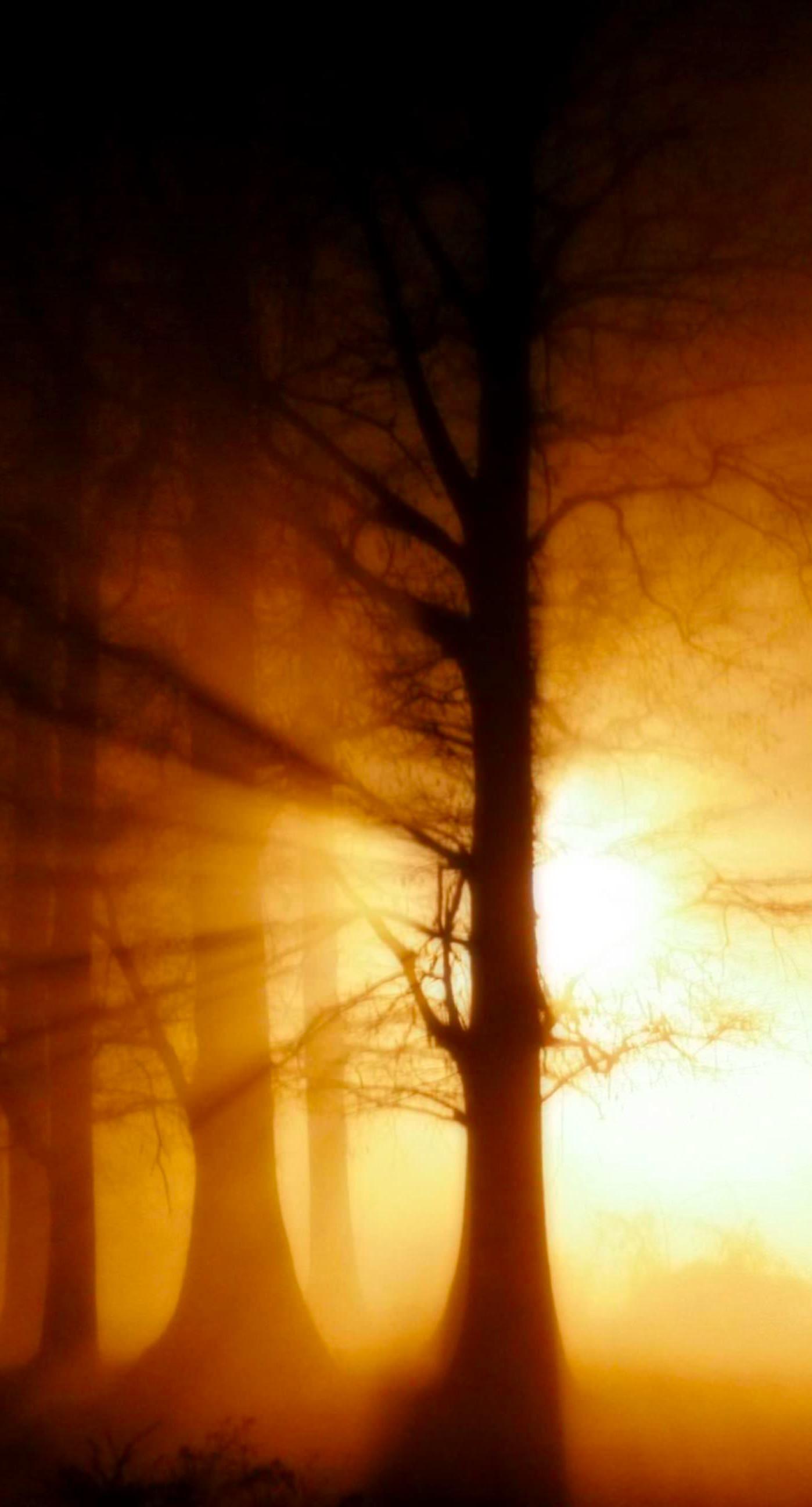 Hutan Pemandangan Matahari Terbenam Wallpapersc IPhone8Plus