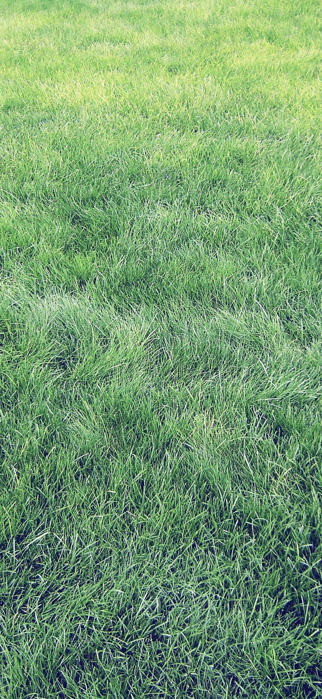 Natural Grass Green Wallpaper Sc Iphonexs