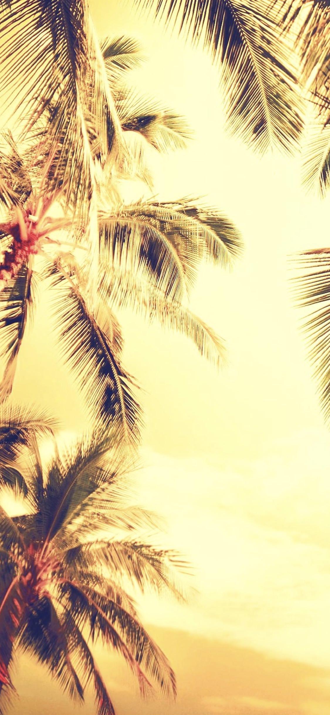 Tree Landscape Palm Wallpaper Sc Iphonexs