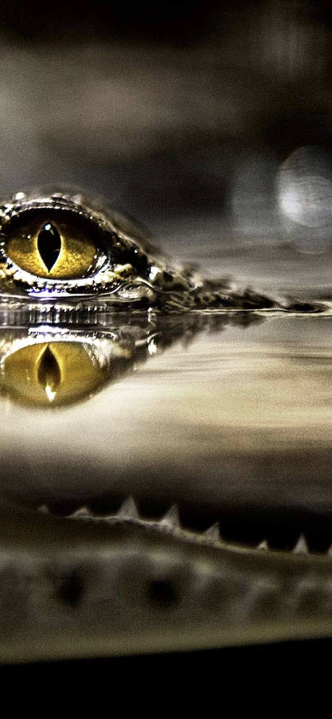 Cool Water Crocodile Wallpaper Sc Iphonexs
