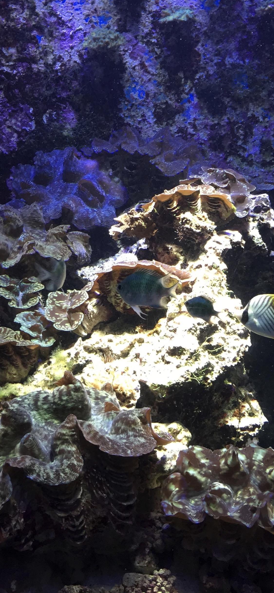 Animal Tropical Fish Tropical Water Group Garden Wallpaper Sc Iphonexs